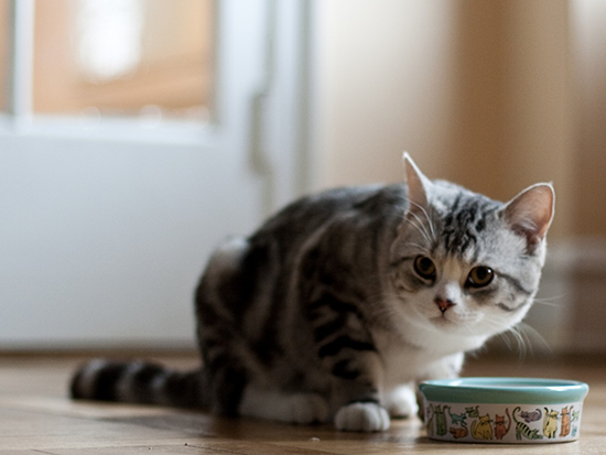 Best Dry Food for Cats Featured Image
